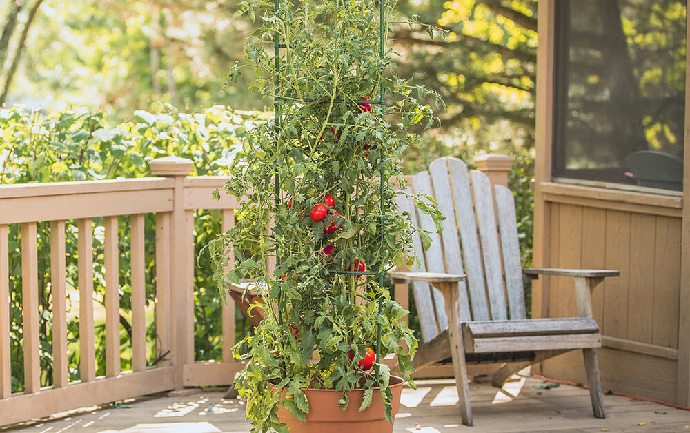 Reviews of Best Tomato Cages
